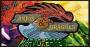 Ed.Nº 111 – Anjos & Dragões, cartas flamejantes com poderesangelicais